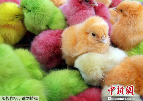 【蜗牛棋牌】儿童的手机瘾要咋治?印尼发小鸡给中小学生喂养